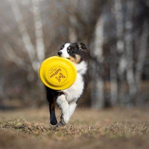 Фризбі для собак