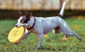 Фризбі для собак Hyperflite